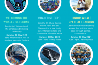 WHALE FESTIVAL 2021 POSTER